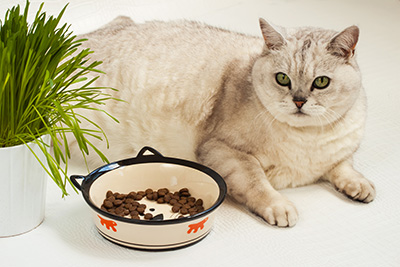 過度餵食導致寵物肥胖。
