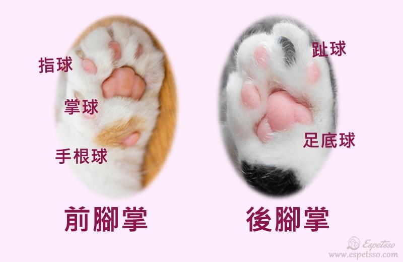 貓腳掌的肉球