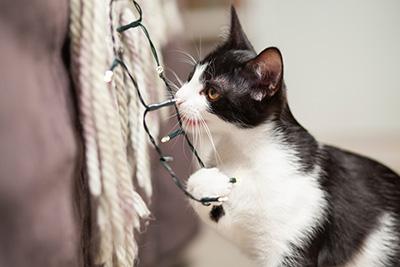 貓隻啃咬電線有機會觸電。