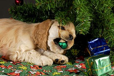狗隻咬爛裝飾品或會誤吞碎片。