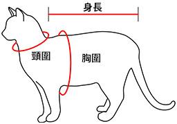 量度貓隻身形