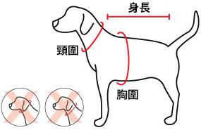 量度狗隻身形