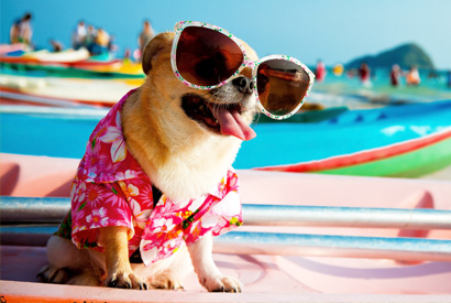狗中暑有甚麼症狀?如何預防?
