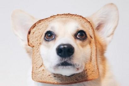 如何挑選狗狗小食