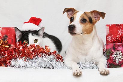 聖誕節貓狗危機逐個捉