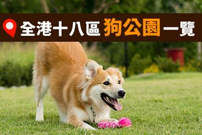 香港九龍新界各區狗公園 / 寵物公園