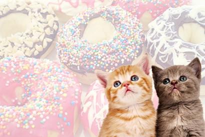 貓沒有甜味味覺