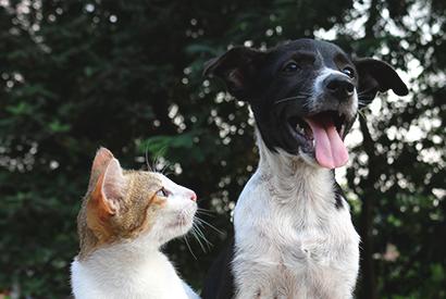 貓狗正常體溫探熱 ABC