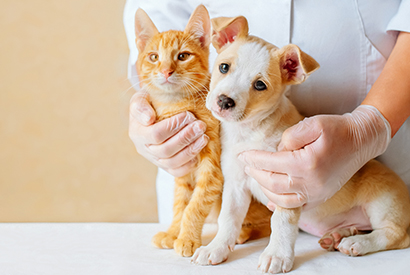 【寵物保險比較】哪份保障最多化驗檢查?