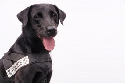 紀律部隊工作犬