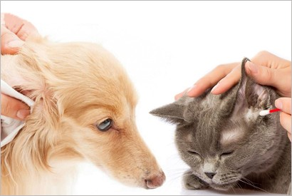 如何預防貓狗耳朵發炎