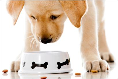 幼犬成犬老犬應選擇不同狗糧